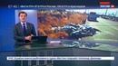 Новости на Россия 24 • В Мексике на трассе найдено 300 мертвых акул
