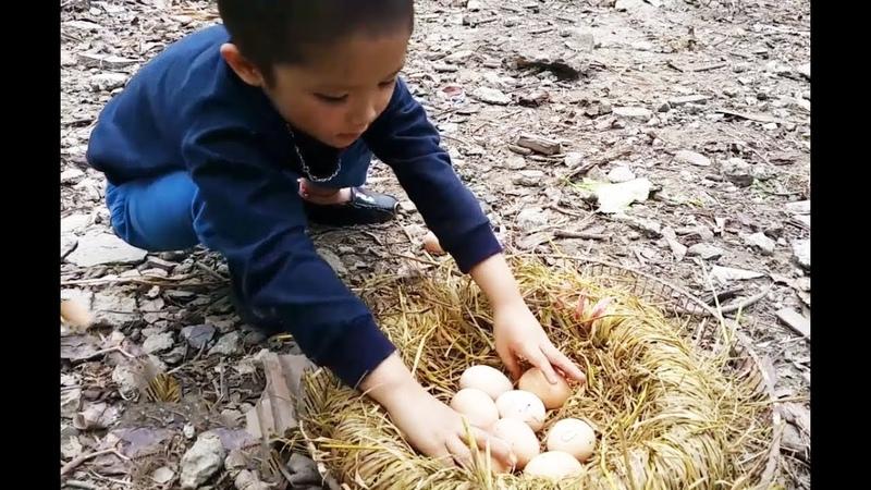 Trò chơi tìm trứng bất ngờ trong vườn của bé Gia Huy| The game finds unexpected eggs in the garden