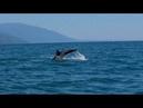 🐳 Дельфины в Черном море. Морская прогулка на катамаране и банане. АДЛЕР Сочи 2018