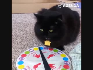 Ох уж эти чёрные котики - Маленькие хитрости / Домашний лайфхак