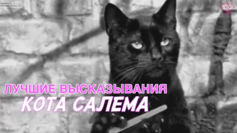 Лучшие высказывания кота Салема
