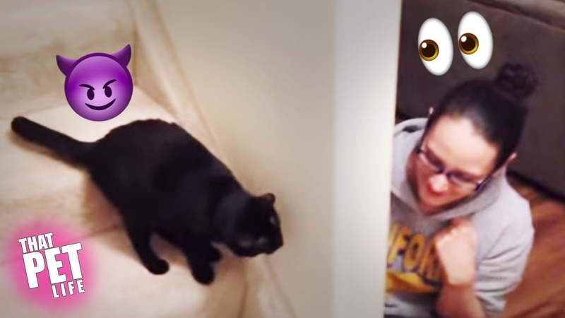 Cat Plots Sneak Attack On Human 😼👀 | Funny Cat Compilation