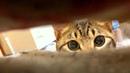 Лучшие приколы с животными 2019. Смешные видео про кошек, смешные коты приколы 2019. Веселые кошки.