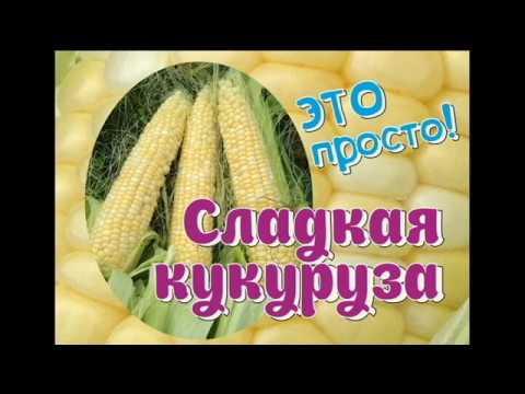 Сладкая кукуруза. Это просто!