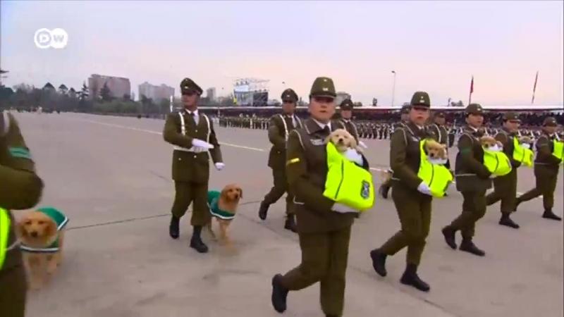 Военные парады бывают и такими собаки