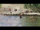Велопрогулка к речке Южный Буг