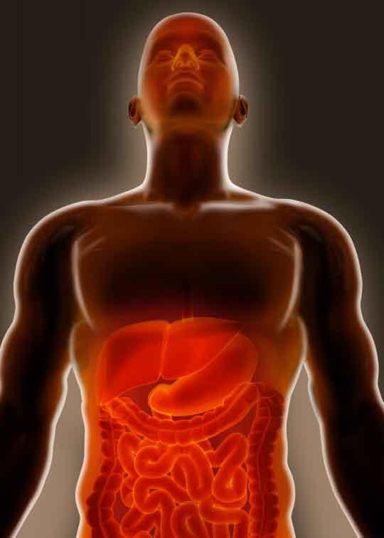 Гастрит и дуоденит относятся к воспалению двух различных органов в брюшной полости