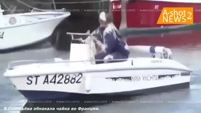Владимира Соловьёва обосрала чайка в Италии неподалёку от его дачи на озере Комо