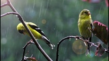 4 HOURS Relaxing Piano Music with Rain Sounds Nature Sounds Musica para Relaxar