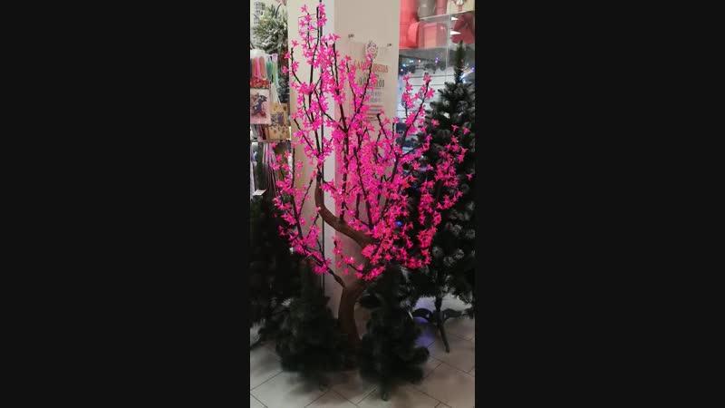 Сакура Цветочная поляна