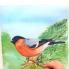 Bullfinch in pine tree branches🌲 ⠀ I made it today thinking about winter holidays I can't wait to trim a Christmas tree again🤩