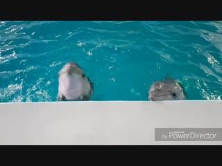 Дельфинячьи танцули