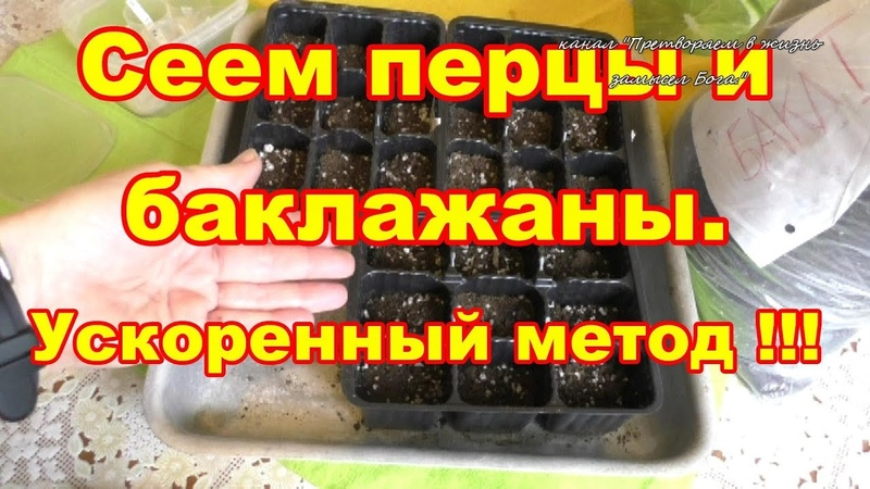Сеем перцы и баклажаны,метод ускоренного выращивания!
