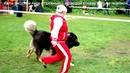Питомник Кавказских овчарок, продает щенков. www.r- 79262205603 Татьяна Ягодкина