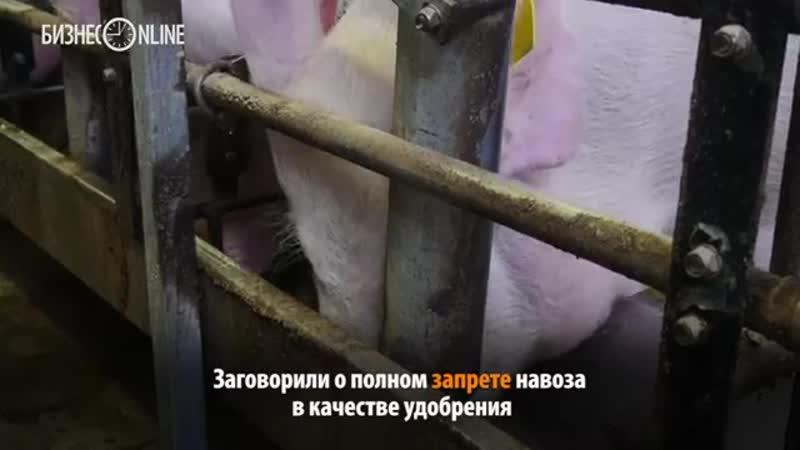 Деньги, которые пахнут: навозное «золото» Татарстана