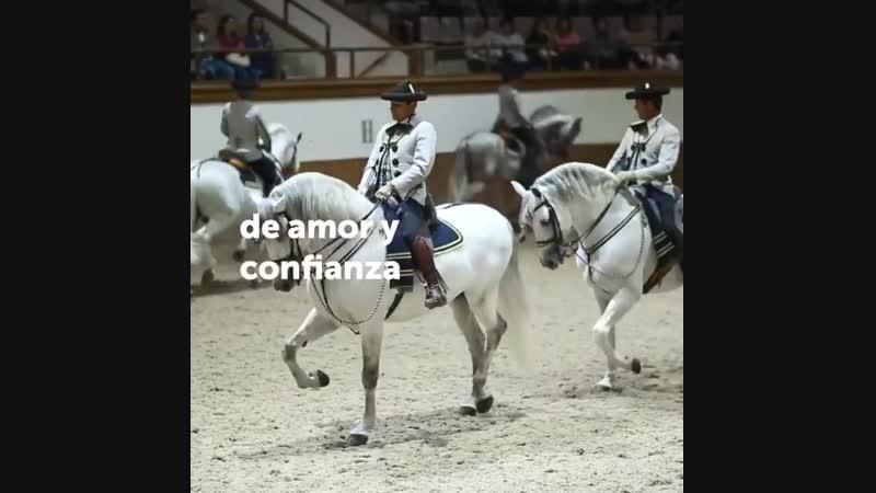 Caballos de Jerez, Andalucía: la Escuela Ecuestre.