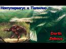 Жизнь Острова Черепа (The Life of Skull Island) - Ноктупервагус и Папилио