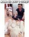 """🎞🐱🐶ЗАБАВНЫЕ ВИДЕО ЖИВОТНЫХ on Instagram: """"Не трожь моих детей 😠 . ❤️Ставь Лайк, если любишь животных 💬Оставляй комментарии 👥Отмечай друзей . ✅Подпи..."""