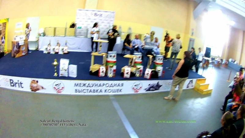 16092018, Выставка кошек, Харьков, Радмир Экспохолл, WCF, Best and show