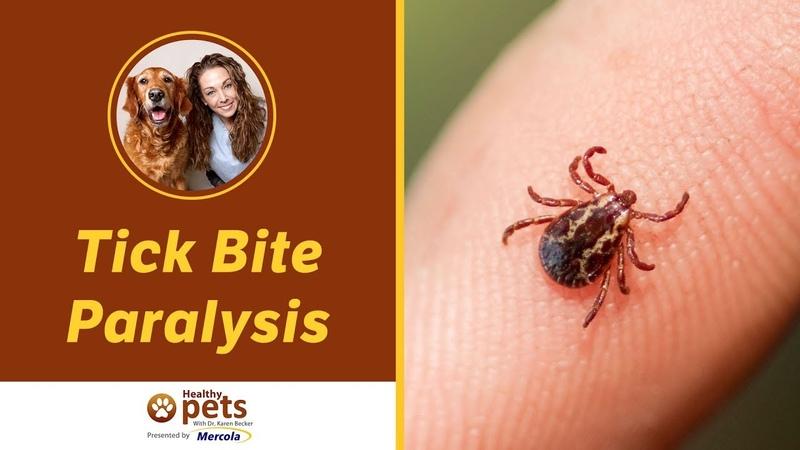 Паралич после укуса клеща Tick Bite Paralysis