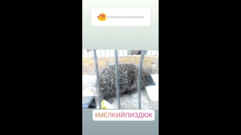 Мелкая Обжора