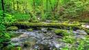 Шум ручья в лесу, пение птиц. Расслабляющие звуки воды - 2 часа для дневного сна