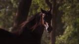 WILD HORSES You Got To Run BUFFY SAINTE MARIE