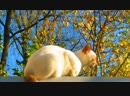 Середина ноября и наш кот на крыше нежится на солнышке . Нидерланды