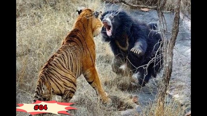 Thế giới động vật và những trận đại chiến đáng xem 04