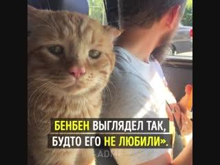 Самый грустный в мире кот