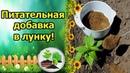 ДЕШЕВАЯ ОРГАНИЧЕСКАЯ ДОБАВКА В ЛУНКУ ПРИ ПОСАДКЕ ПЕРЦА!