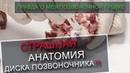 Правда про межпозвоночную грыжу. Анатомия позвоночника. Вертебролог Игнатьев Радион Геннадиевич.
