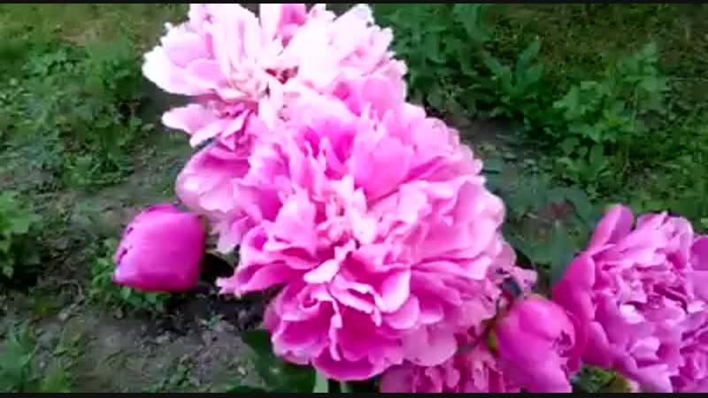 цветы матери.mp4