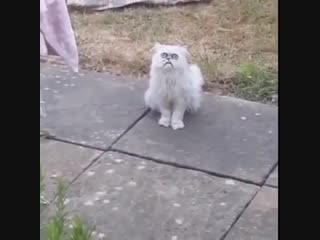 weird looking fucking cat