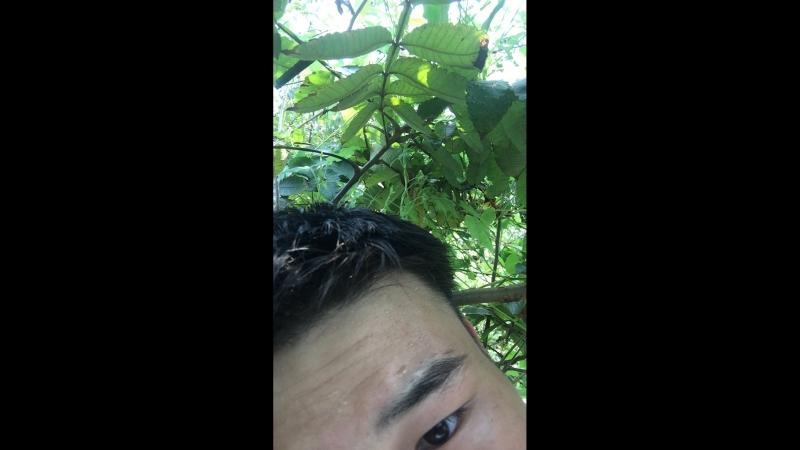 Yao Haoqiang — Live