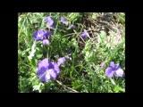 Просто цветы Ефрем Амирамов