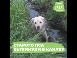 20-летнего выброшенного пса спасли из канавы