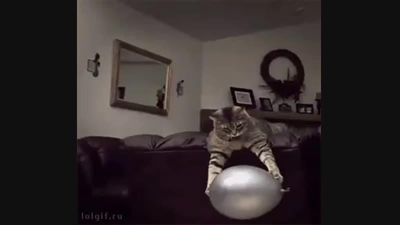 шарик