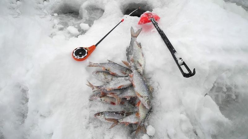 Плотвица с сухарями. Рыбалка на волжских разливах в январе.