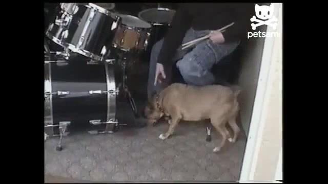 Пёс фигачит по кардану