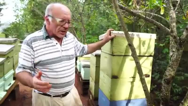 Пасека. Если Вашу Семью Обворовали,Что делать Пчеловодство для начинающих. мёд.