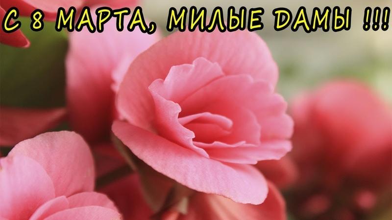 Мои праздничные новинки. С 8 марта, милые дамы! 🌺 [Надежда и мир]