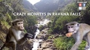 Feeding monkeys at the waterfall Ravana Falls Sri Lanka Водопады Шри Ланки