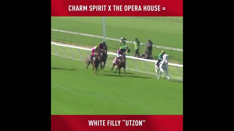 Utzon wins debut.