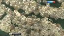 У Севералмаза украли 4 алмаза стоимостью 5 000 000 долларов