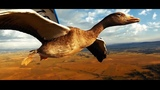 GOPRO Madness - Flying with birds on board a microlight ( 2018 )#HyperSmooth Christian Moullec