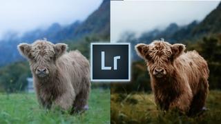 How to Edit Like @marinaweishaupt Instagram Lightroom Editing Tutorial Travel Wildlife Photos Edit