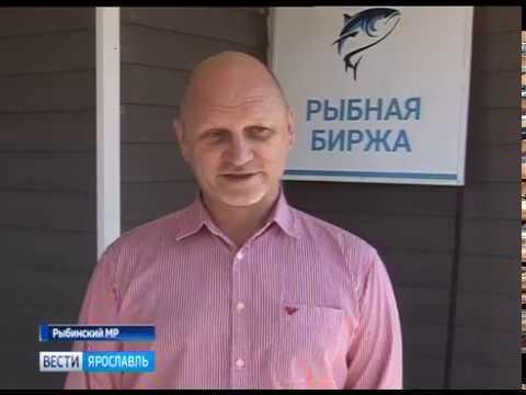В Рыбинском районе заработал уникальный для региона проект «Рыбная биржа»
