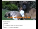Песня пса, который не умеет бегать