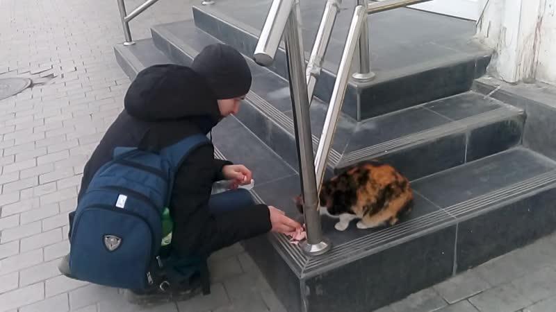 Кормим кошку сосиской